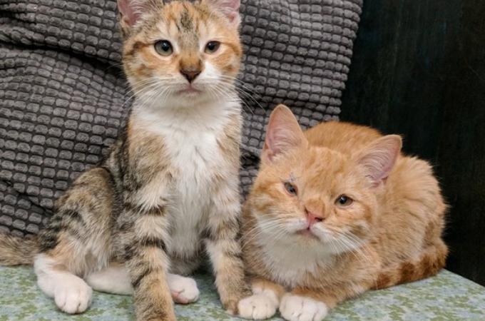 凍えるような寒さの中、病と闘いながら2匹で生きてきた猫たち。保護されると見せた安心する姿。