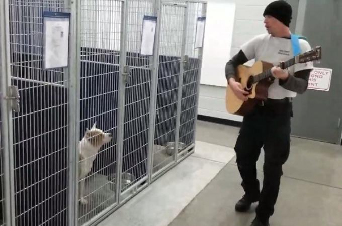 保護犬にギターを聴かせる職員。うっとりとした姿でその音色を聴く犬たちの様子がこちら!