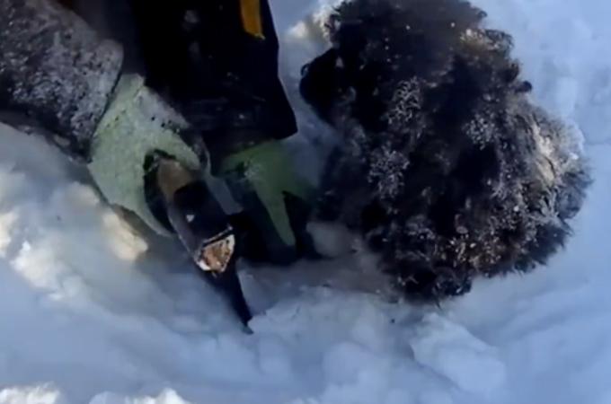 毛が凍結し、身動きが取れなくなっていた子犬。無事に発見され救助される。