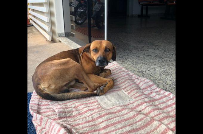 亡くなった飼い主が出てくるのを病院の外で4ヶ月も待ち続ける犬。
