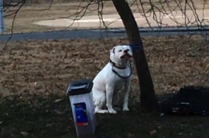 極寒の中、公園の木に繋がれたまま捨てられた犬。そして、残されていたメモに書かれていた内容とその行動に心が痛む。