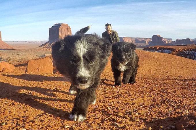 砂漠のど真ん中にいる迷子の子犬2匹を発見した男性。迷うことなく里親となり、その後、旅をしながら成長する。
