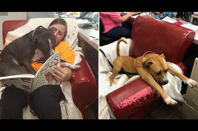 保護犬たちを少しでも幸せにするために、いらなくなったソファを集める施設。そして笑顔が増える結果に。