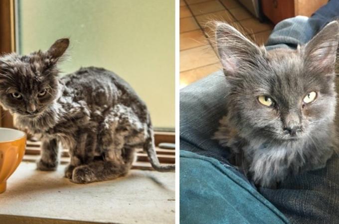 誰が見ても衰弱しきって骨と皮だけだった子猫。保護されわずか3ヶ月後に見せた美しい姿とは。