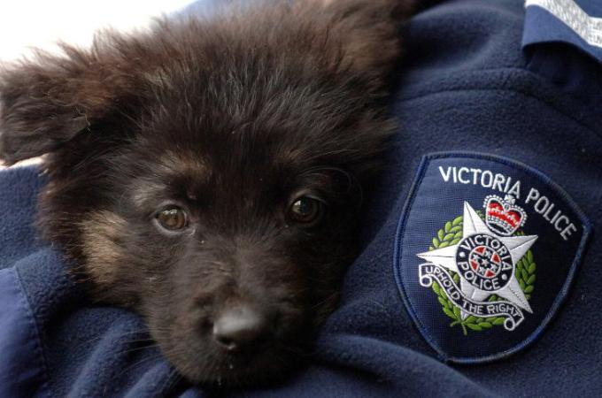 警察犬や飼い犬が突然、餌を食べずにやせ細り死亡。ドッグフードが原因とみられ自主回収される。