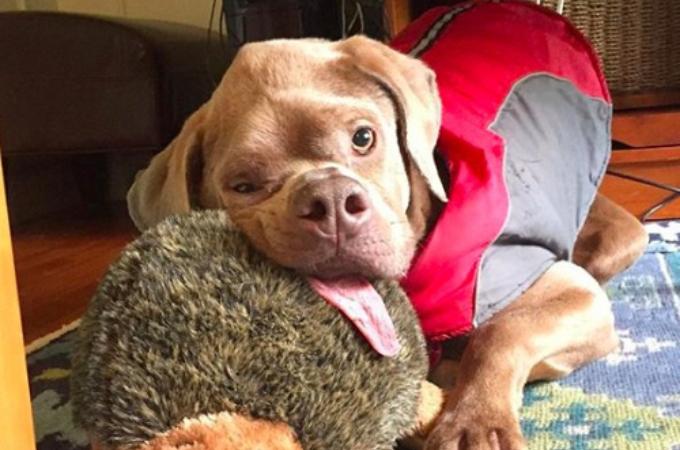 病気のより顔面が変形し、安楽死を勧められた犬。素敵な家族との出会いによって今を精一杯生きる。