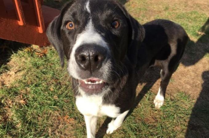 一度は里親が決まるも、再びシェルターに戻された犬。病気によって余命6ヶ月と宣告、そして最期を迎える場所とは。
