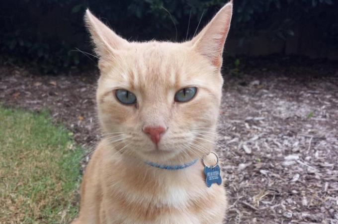 ジョギングをしていたら迷子猫と遭遇。首輪を確認し、そこに書かれていたメッセージに驚く!