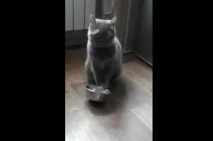 口数の少ない猫が、ご飯を催促する様子にプレッシャーを感じる。