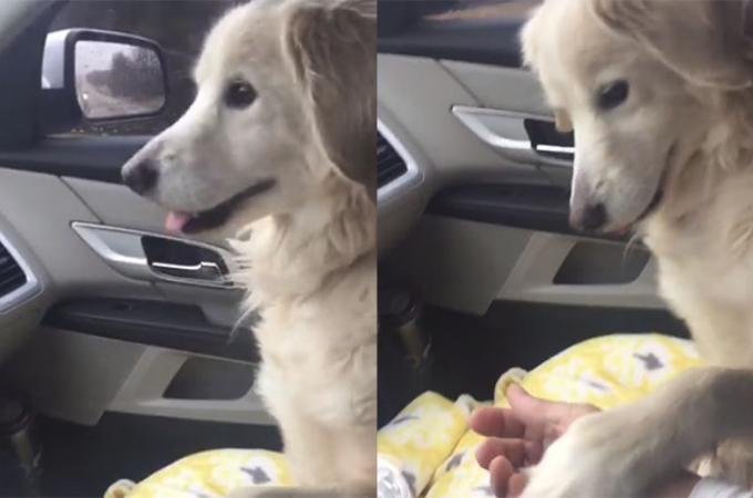 シェルターから一時的に引き取られる犬が車中で撮った行動に胸が締め付けられる。