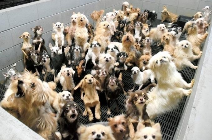 犬や猫を約400匹も過密状態で飼育、繁殖していたパピーミル「子犬工場」。その悲惨な状況に胸が痛む。