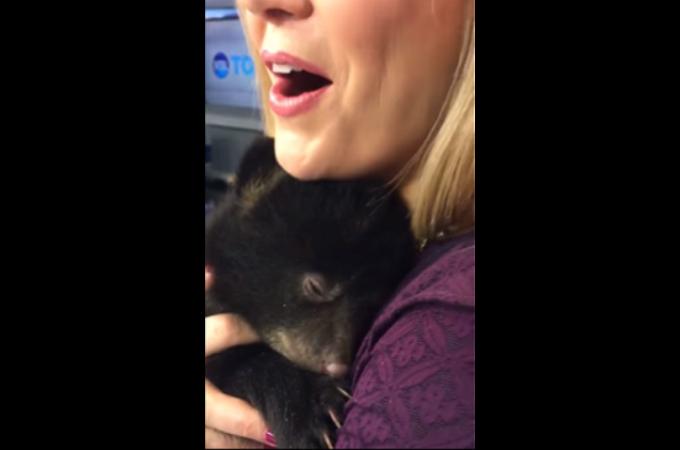 【動画】誰もが胸キュンするクマの寝言がこちら!!