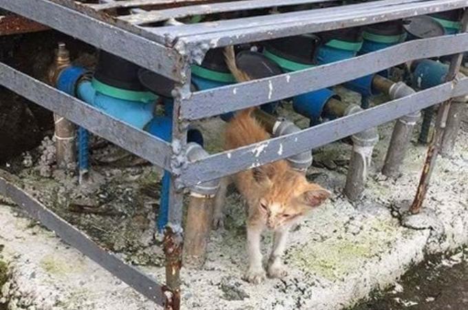 痩せこけ、見るからに痛々しい子猫が水道メーターの下で発見され、その後見せた綺麗な姿と優しい表情とは。