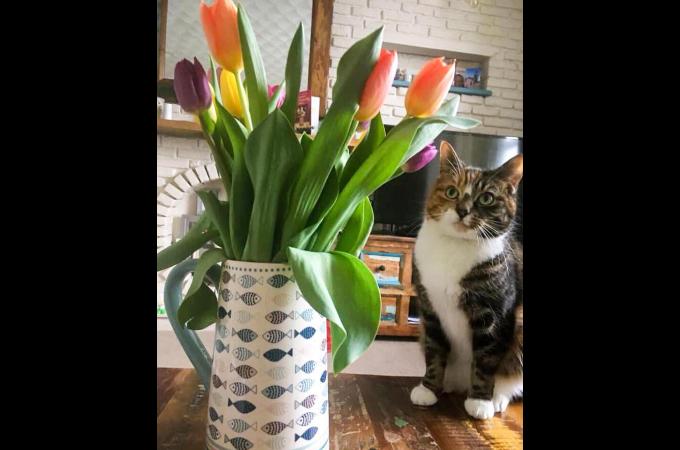 チューリップと一緒に撮影した猫。そして、翌日命を落とす結果に。その原因に胸を痛める。