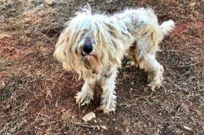 森に捨てられボロボロの状態だった犬。保護直後の様子と、3ヶ月後の見違える姿とは。