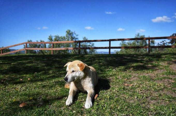 13年もの長い間、公園に住み着いている犬。人々から気にかけられながら自由に生きる。