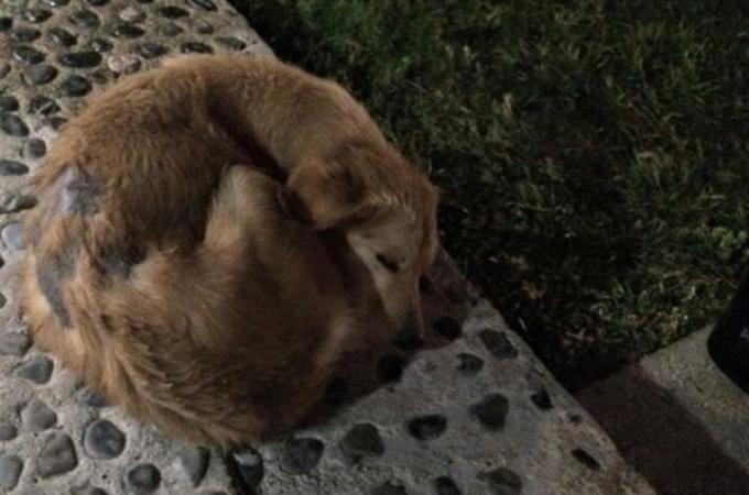 旅行先で出会ったボロボロの野良犬。その姿に心を痛めたある一家がとった行動と、その後とは。