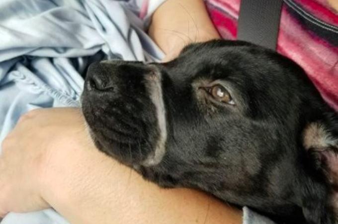 飼い主からの虐待で呼吸もままならないほど、きつく結束バンドで口を縛られていた子犬が保護される。