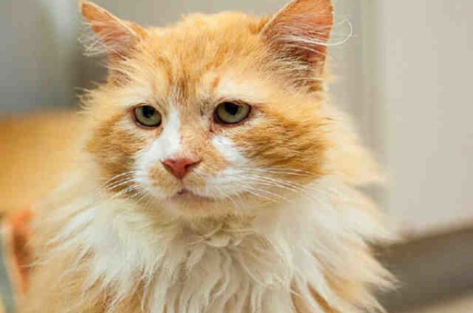 飼い主に捨てられた猫が、19kmもの道のりを戻り飼い主の元へ。しかし、飼い主が下した悲しい決断とは。