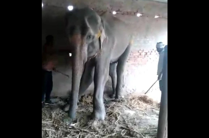 密猟者によって母親と引き離された小ゾウ。虐待やネグレクトなどによってこの世を去る。