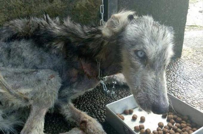 路上で発見したボロボロの犬。懸命なケアを続けた結果、思いもよらぬ犬種だと判明する。