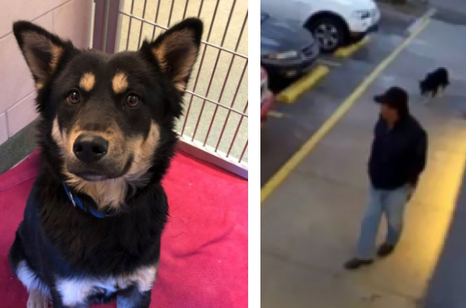 ドーナツ店の駐車場で捨てられた1匹の犬。首輪に挟まれたメモ紙の内容と、犬のその後とは。
