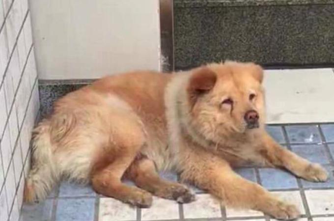 毎日、会社に出勤した飼い主の帰りを駅で待ち続ける犬。