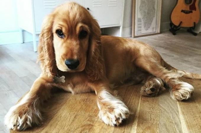 散歩中に犬が何か口にしてその後、突然その場で回り始めた。診察の結果と、落ちて口にしたものとは。