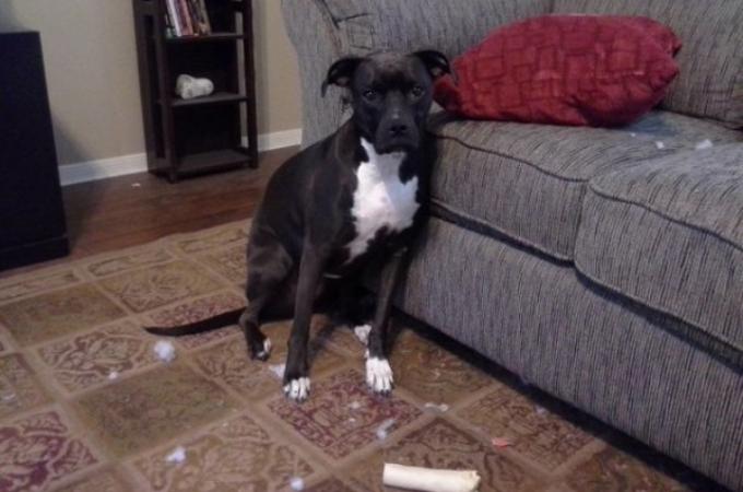 新しく買うおもちゃを次々に破壊していく犬。しかし、あるおもちゃに関しては何日経っても・・