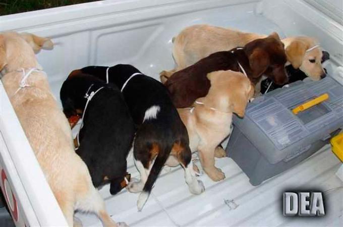 子犬の体内にヘロインを忍ばせ密輸していた獣医。その残忍な手法に憤りを覚える。