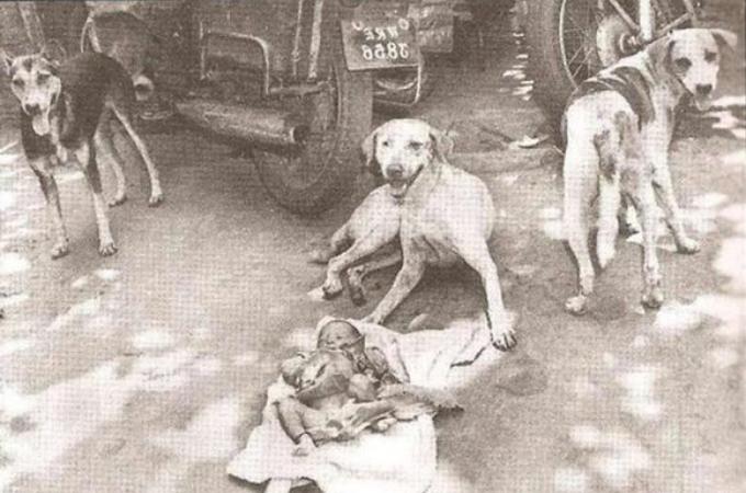捨てられた赤ん坊を夜通し守り続けた3匹の野良犬たち。