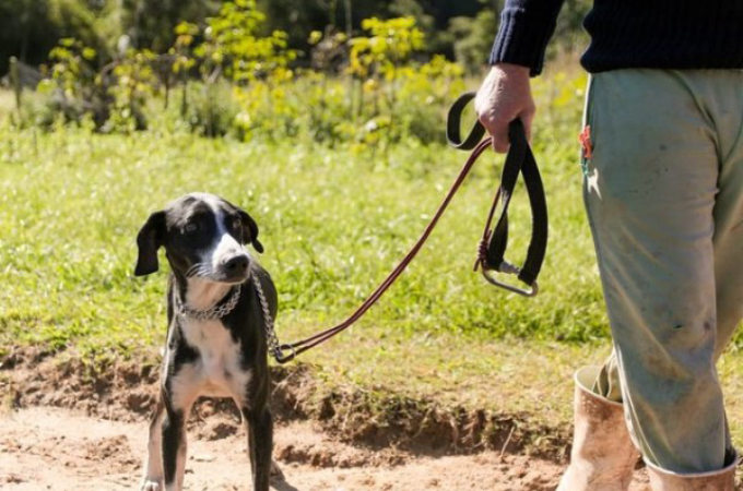 行方不明になって6日間。誰も予想できない場所にいた犬の奇跡の救出劇。