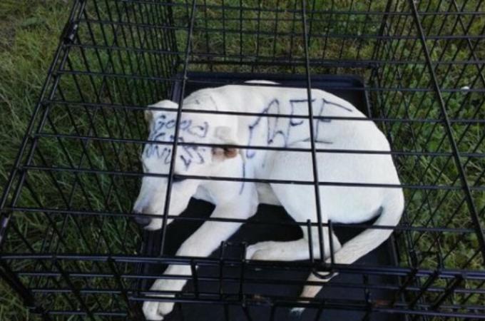 公園に捨てられていた犬に書かれていたメッセージ。その、あまりにも心無い言葉に胸が苦しくなる。