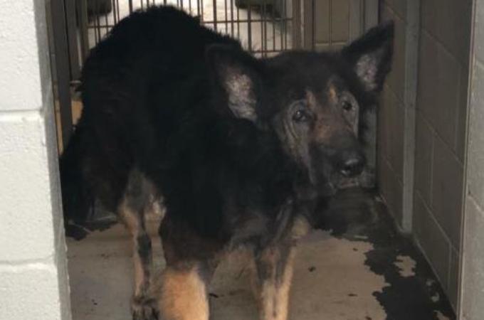 高齢になった愛犬を安楽死させたいとシェルターに持ち込んだ飼い主。そして、職員がとった行動とは。