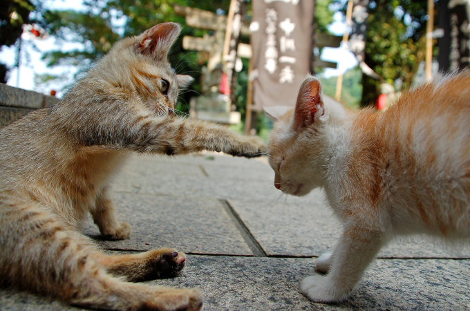 母猫の代わりに飼い主さんが愛猫にがしないといけない3つの事