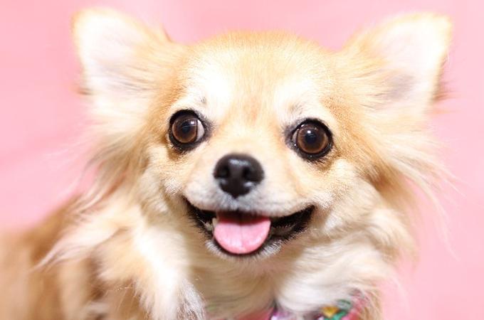 一目でわかる愛犬がうれしいときに見せる6つのしぐさ・行動