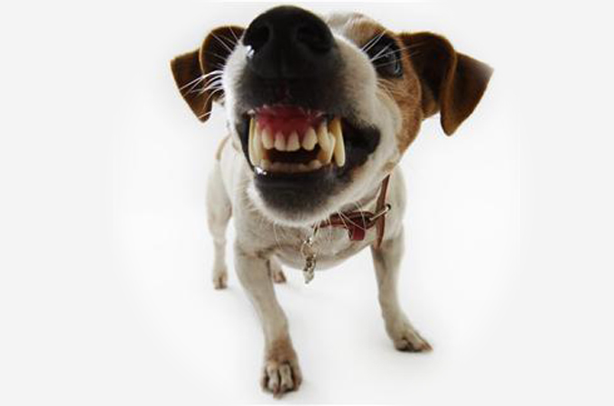 一目でわかる愛犬が怒っているときに見せる3つのしぐさ・行動