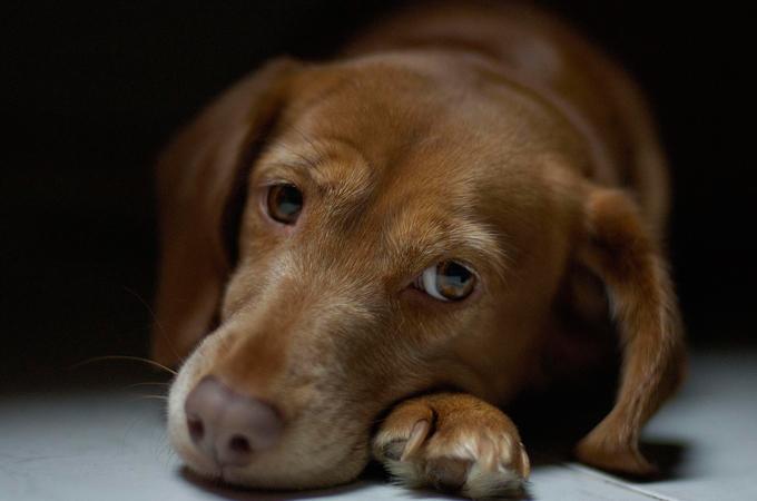一目でわかる愛犬が怖いと感じているときに見せる5つのしぐさ・行動