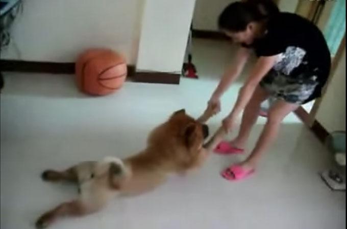 風呂好き犬と風呂嫌い犬の対照的な動画を見比べてみた