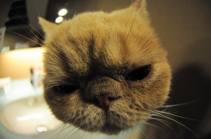 思わず笑顔になってしまうほどかわいい猫のgif画像18選