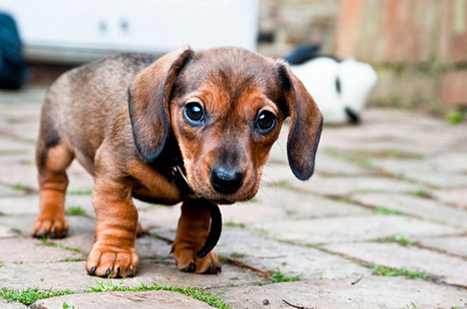 この5つの症状があらわれたら病気かも?しぐさ・症状からわかる犬の病気