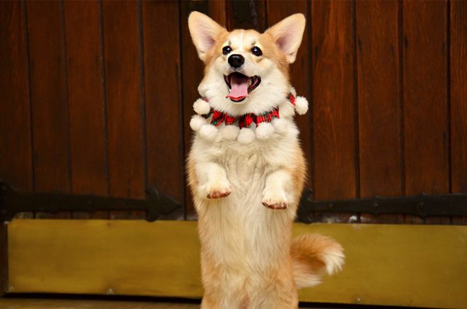 愛犬のやめさせたい興奮3つの理由と直し方