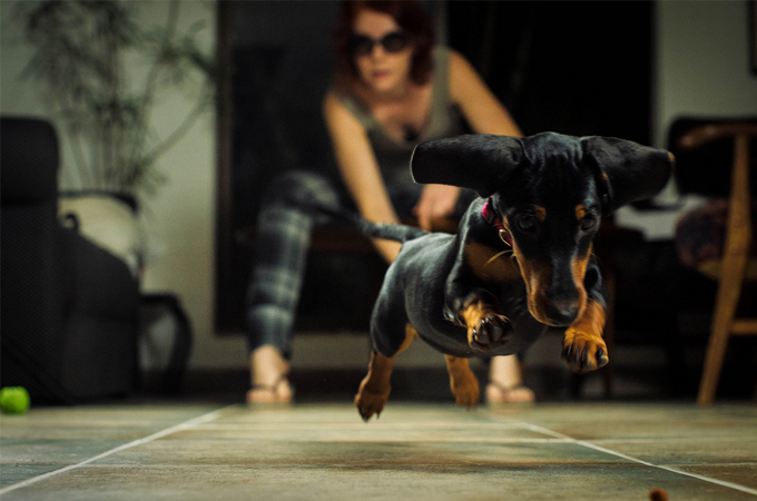 すぐにでも実践できる愛犬にもっと好かれるコツ3か条教えます!