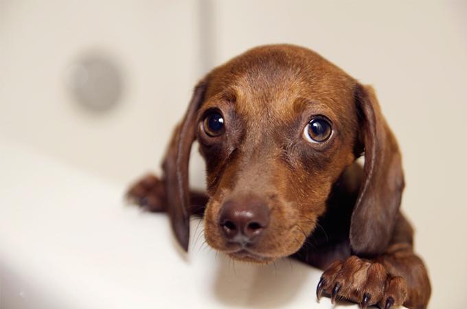 愛犬にうっかり食べられた!ついあげてしまった!を防ぐために飼い主さんにできる3つのこと