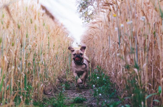 犬種のルーツにあった犬の育て方【貴族編】