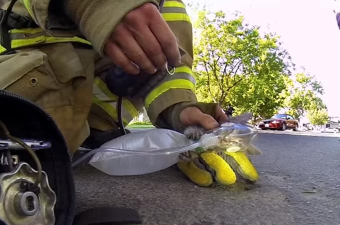 小さな子猫、それも大切な一つの命!消防隊員のとった懸命の救命処置に感動