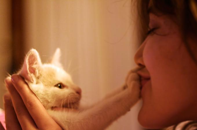 猫に飼い主さんの言葉をうまく伝えるためのコツまとめ