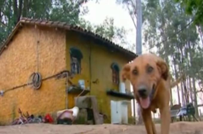 人間は動物からもっとたくさん学ぶべきことがある!無償の愛に溢れた犬に感動