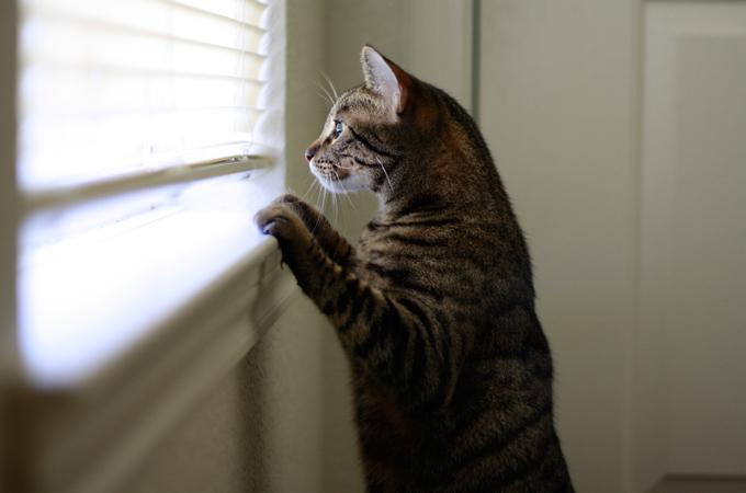 今日から出来る、猫が室内でも簡単に春を感じられる5つの工夫