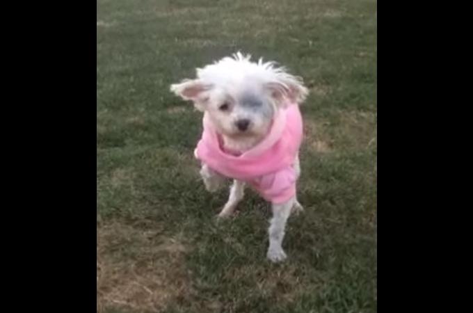12年間檻に閉じ込められていたある1匹の犬!初めて芝生を歩く姿に世界中が涙